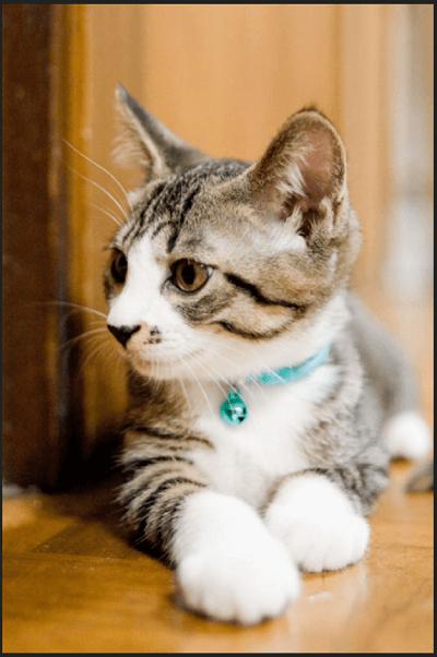 TinyPNG 画質変化 「猫」圧縮後
